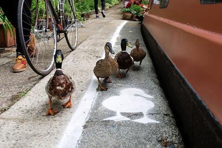 """近日,在伦敦、伯明翰以及曼彻斯特的街道上出现了许多为可爱的鸭子准备的靓丽""""鸭行道"""",虽然宽度有限,但足够小鸭子们并排行走啦。它的设计者希望通过此举来提醒人们对动物的保护,因为在城市里留给它们的空间以及太少了。"""